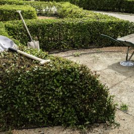 barrow and gardening spade on the hedge in the garden. Springtime